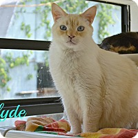 Adopt A Pet :: Clyde - PT ORANGE, FL