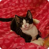 Adopt A Pet :: Bandit - Boise, ID