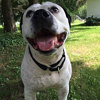 Adopt A Pet :: Jack - Courtesy Post - kennebunkport, ME