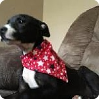 Labrador Retriever Mix Puppy for adoption in Manchester, New Hampshire - Betty - pending
