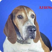 Coonhound/Coonhound Mix Dog for adoption in Carmichael, California - Clemson