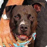 Adopt A Pet :: ZEUS - Louisville, KY
