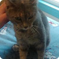 Adopt A Pet :: Saydee - Wakefield, MA