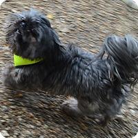 Adopt A Pet :: Jackson - Prole, IA
