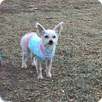 Adopt A Pet :: Heddy - Lindale, TX