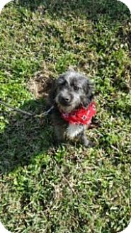 Small Dog Adoptions Bay Area