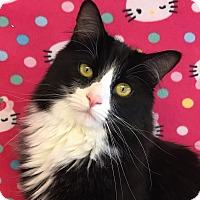 Adopt A Pet :: Sam - Colorado Springs, CO