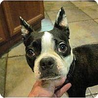 Adopt A Pet :: coco - Temecula, CA