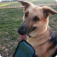 Adopt A Pet :: Taya - Fort Riley, KS