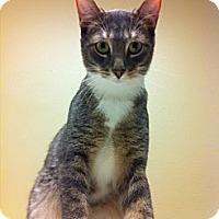 Adopt A Pet :: Alistar - Pittstown, NJ