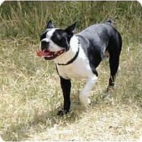 Adopt A Pet :: Gizmo - Los Alamitos, CA