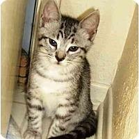 Adopt A Pet :: Shezie - Irvine, CA