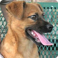 Adopt A Pet :: Sophie - white settlment, TX