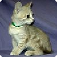 Adopt A Pet :: Peyton - Powell, OH