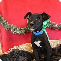 Adopt A Pet :: Frack - Waldorf, MD