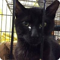 Adopt A Pet :: Molokai - Trevose, PA