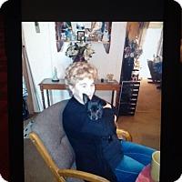 Adopt A Pet :: Gail - springtown, TX
