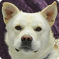 Adopt A Pet :: Kane - Huntley, IL