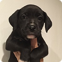 Adopt A Pet :: Twinkle - Ft. Lauderdale, FL
