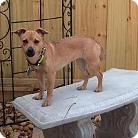 Adopt A Pet :: Maddy - Oviedo, FL
