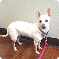 Adopt A Pet :: Wendy - Oak Ridge, NJ