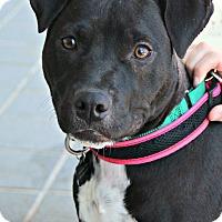 Adopt A Pet :: Furiosa - Richmond, VA