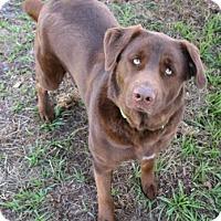 Adopt A Pet :: Bear (Prayder) - Loxahatchee, FL