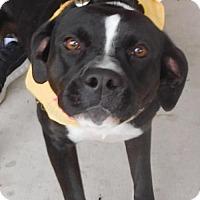 Adopt A Pet :: Zoe - Rockville, MD