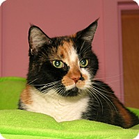 Adopt A Pet :: Pepper - Milford, MA