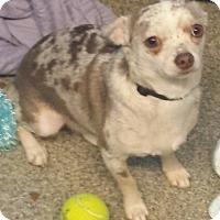 Adopt A Pet :: Tug - geneva, FL