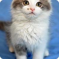 Adopt A Pet :: Charlotte - Potomac, MD
