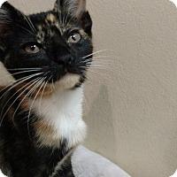 Adopt A Pet :: Kristina - Tampa, FL
