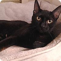 Adopt A Pet :: Calypso - Richmond, VA