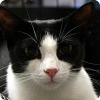 Adopt A Pet :: Lacie - Madisonville, LA