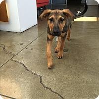 Adopt A Pet :: Jonathan Byers - Jersey City, NJ