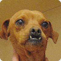 Adopt A Pet :: Mike - Heber City, UT