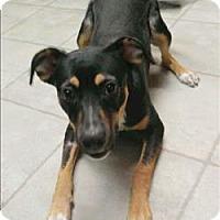 Adopt A Pet :: Liza Jane - Columbus, OH