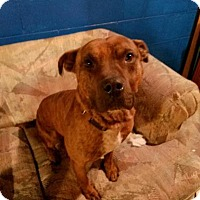 Adopt A Pet :: Duke-Fee Lowered - Union Grove, WI