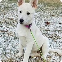 Adopt A Pet :: Kasha - Flemington, NJ