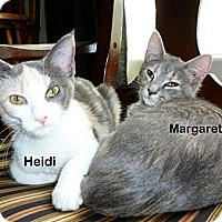 Adopt A Pet :: Heidi - Portland, OR