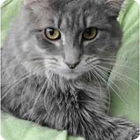Adopt A Pet :: Dugan - Columbus, OH