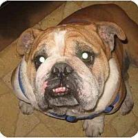 Adopt A Pet :: Roscoe-Adoption Pending - San Diego, CA