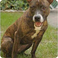 Adopt A Pet :: Tina - Chicago, IL