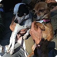 Adopt A Pet :: SALLY - Valley Village, CA