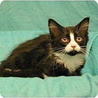 Adopt A Pet :: Ernie - Sacramento, CA