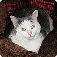 Adopt A Pet :: Rascal - Euclid, OH
