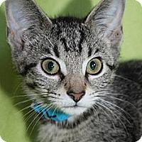 Adopt A Pet :: Velma - Richland, MI