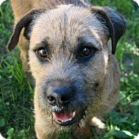Adopt A Pet :: Hubble - Lufkin, TX