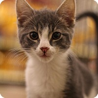 Adopt A Pet :: Tink - Sacramento, CA