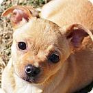 Adopt A Pet :: Rose S~B